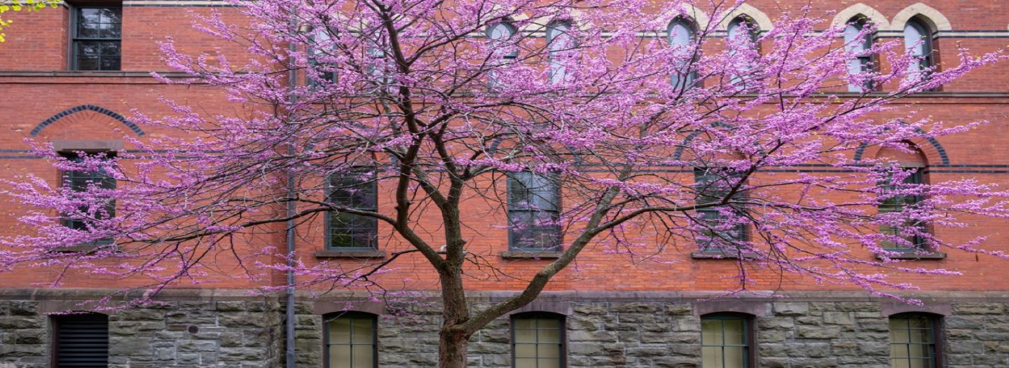Spring blossoms outside Sage Hall
